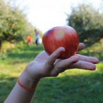 Change Management -  Is It Time To Upset Your Apple Cart